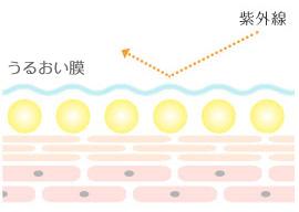 乾燥した肌は紫外線のダメージを受けやすい